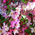 Blossoms 1 by Lenore Senior