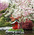 Blossoms Abound In The Japanese Garden by David Coleman