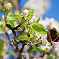 Blossoms And Butterfly by Tatiana Travelways