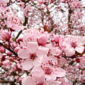 Blossoms Art Spring Pink Tree Blossom Floral Baslee Troutman by Baslee Troutman