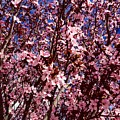 Blossoms by Donna Spadola