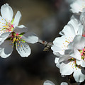 Blossoms by Doug Holck