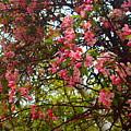 Blossoms In The Shanendoahs by Tammy Bullard