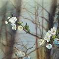 Blossoms In The Wild by Maryann Boysen