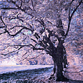 Blossoms In Winter by Isabella Howard