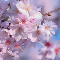 Blossoms by Luv Photography