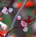 Blossoms Petite by Marta Robin Gaughen