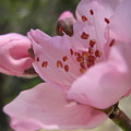 Blossoms by Rebecca Shupp