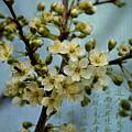Blossomtime by Nancy Morgantini