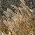 Blowin In The Wind by Barb Montanye Meseroll