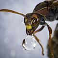 Blowing Bubbles by Chris Cousins
