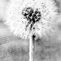 Blowing In The Wind Pencil Effect by Robert Grubbs