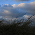 Blowing In The Wind by Timothy Johnson