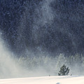 Blowing Snow by Carolyn Fox