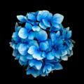 Blue by Adrian Evans