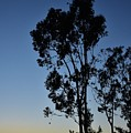 Blue And Gold Sunset Tree Silhouette I by Linda Brody