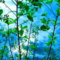 Nature's Gifts Of Blue And Green by Sybil Staples