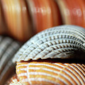 Blue And Orange Seashells by Angela Murdock
