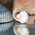 Blue And Peach Seashells by Angela Murdock
