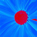 Blue Sun Flower by M Pace