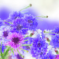 Blue And Violet Cornflowers by Anastasy Yarmolovich