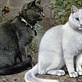 Blue And White Short Haired Cats by W Luker Junior