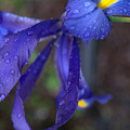 Blue And Yellow by Edward Dunncan