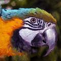 Blue-and-yellow Macaw by Sergey Lukashin