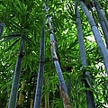 Blue Bamboo by Michiale Schneider