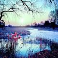 Blue Bayou by Michael Damiani