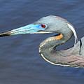 Blue Beak by Sean Allen