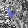 Blue Bell Flower by Wendy Gertz