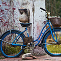 Blue Bicycle by Ms Judi