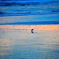 Blue Bird  by Adela Hittell