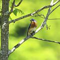 Blue Bird by Deborah Benoit