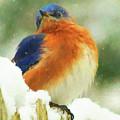 Blue Bird Flurries  by Ola Allen