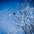 Blue Bird by Heather Joyce Morrill