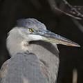 Blue Bird by Jon Glaser
