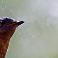 Blue Bird Up Close by Douglas Barnett