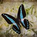Blue Black Butterfly Dreams by Garry Gay