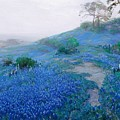 Blue Bonnet Field Early Morning by Pg Reproductions