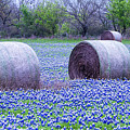 Blue Bonnets In Field by Brian Kinney
