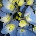 Blue Butterflies by Maxine Billings