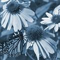 Blue Butterfly by David Stasiak