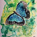 Blue Butterfly by Derek Mccrea