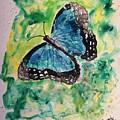 Blue Butterfly by Derek Mccrea