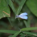 Blue Butterfly by Heather Green