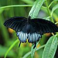 Blue Butterfly II by Sandy Keeton