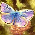 Blue Butterfly by Melissa Herrin