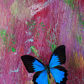 Blue Butterfly On Colorful Wooden Wall by Garry Gay
